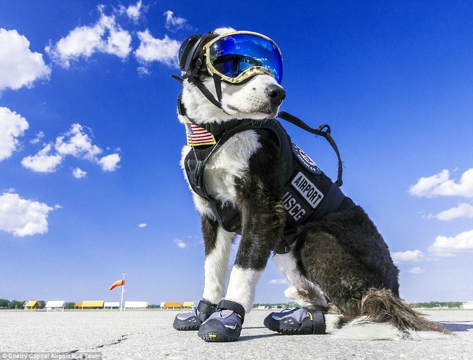 Як собака працює в аеропорту на злітній смузі  - фото 3