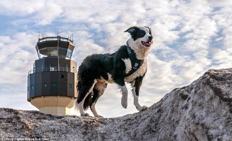 Як собака працює в аеропорту на злітній смузі  - фото 2