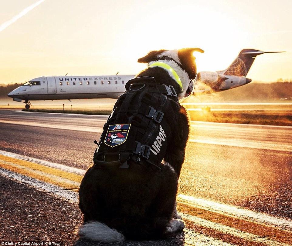 Як собака працює в аеропорту на злітній смузі  - фото 1