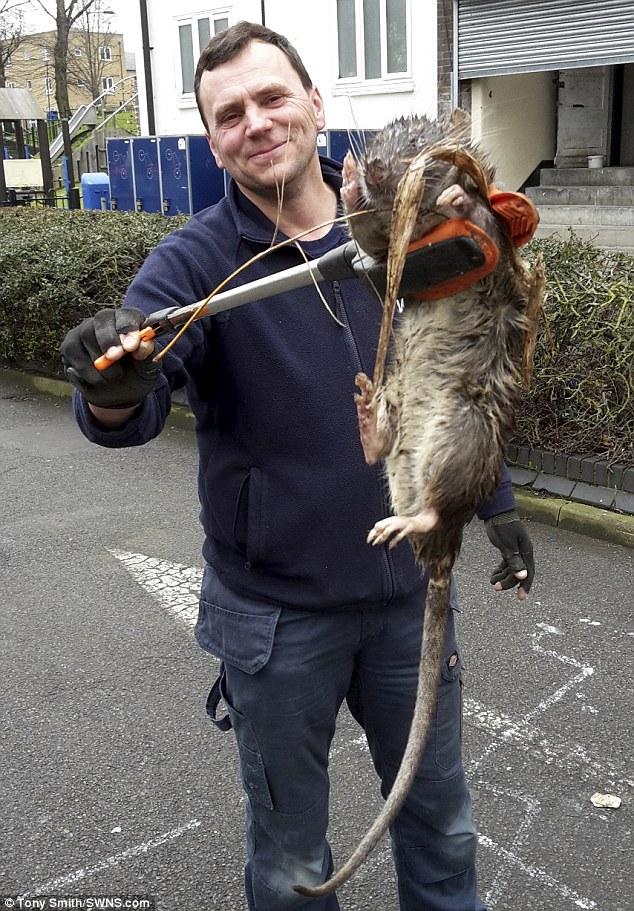 Як виглядає найбільший та найогидніший щур Британії  - фото 1