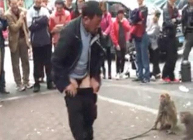Мавпа зняла штани з дресирувальника під час вуличної вистави - фото 3