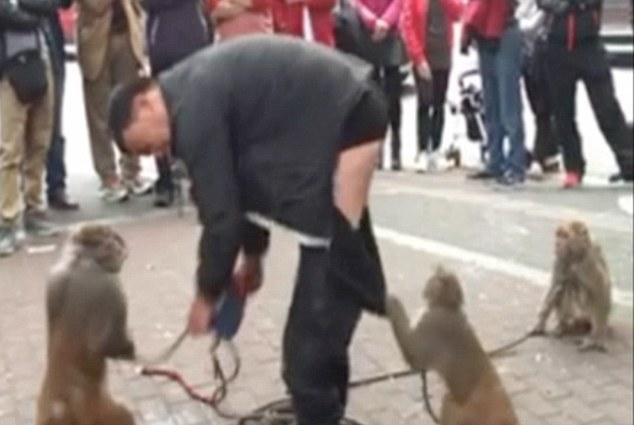 Мавпа зняла штани з дресирувальника під час вуличної вистави - фото 2