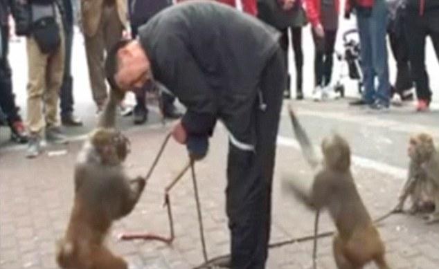 Мавпа зняла штани з дресирувальника під час вуличної вистави - фото 1