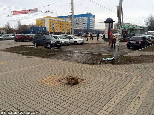 """На Росії кішка """"Хатіко"""" на вулиці чекає на своїх господарів вже рік  - фото 1"""