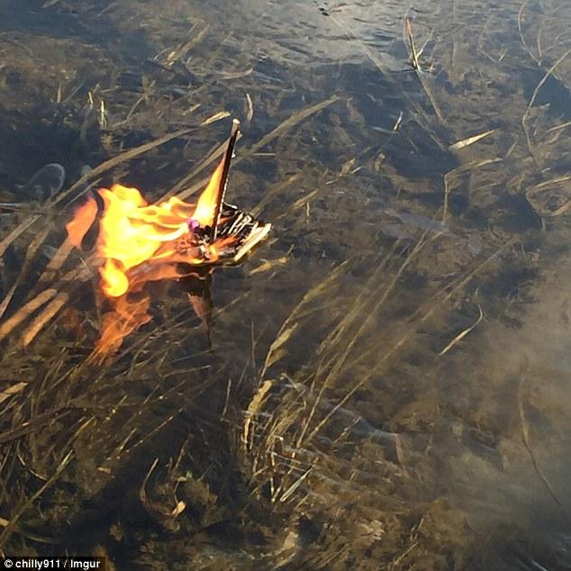 Як дівчина з Канади відправляла улюблену рибку в останню путь  - фото 4