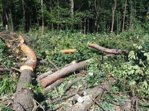 """Перший раунд: киянам вдалося відбити урочище """"Бичок"""" від чергової вирубки дерев - фото 5"""