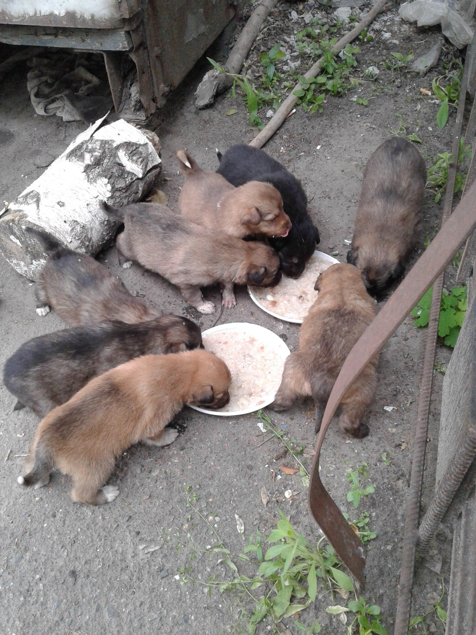 Куди у Миколаєві краще не потикатись, щоб не стати обідом для собак - фото 10