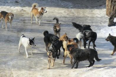 Куди у Миколаєві краще не потикатись, щоб не стати обідом для собак - фото 2