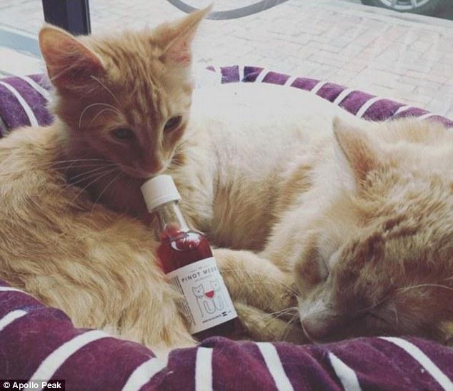 Вино для котиків: у продажу з'явилося Піно Мяу та МусКІТо - фото 1