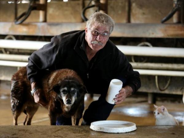 Найстаріший у світі пес помер у 30 років - фото 1