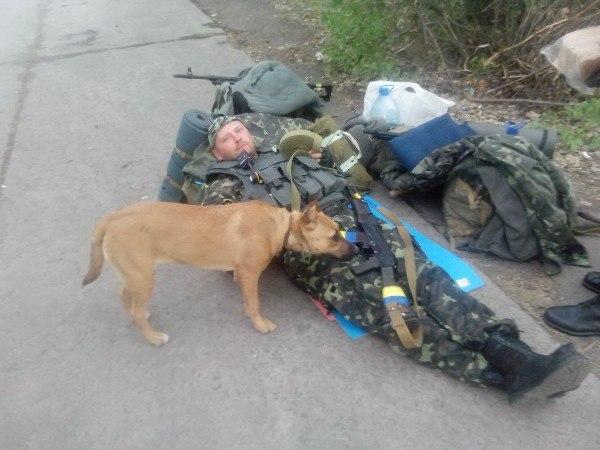 Чим займаються на Донбасі найкращі друзі бійців АТО-4 - фото 13