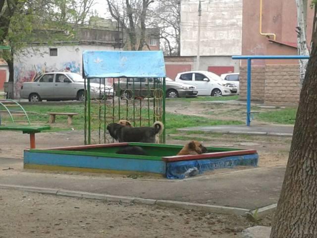 Куди у Миколаєві краще не потикатись, щоб не стати обідом для собак - фото 8