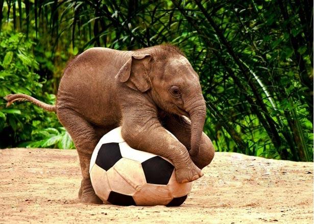 День слона (ФОТО) - фото 8
