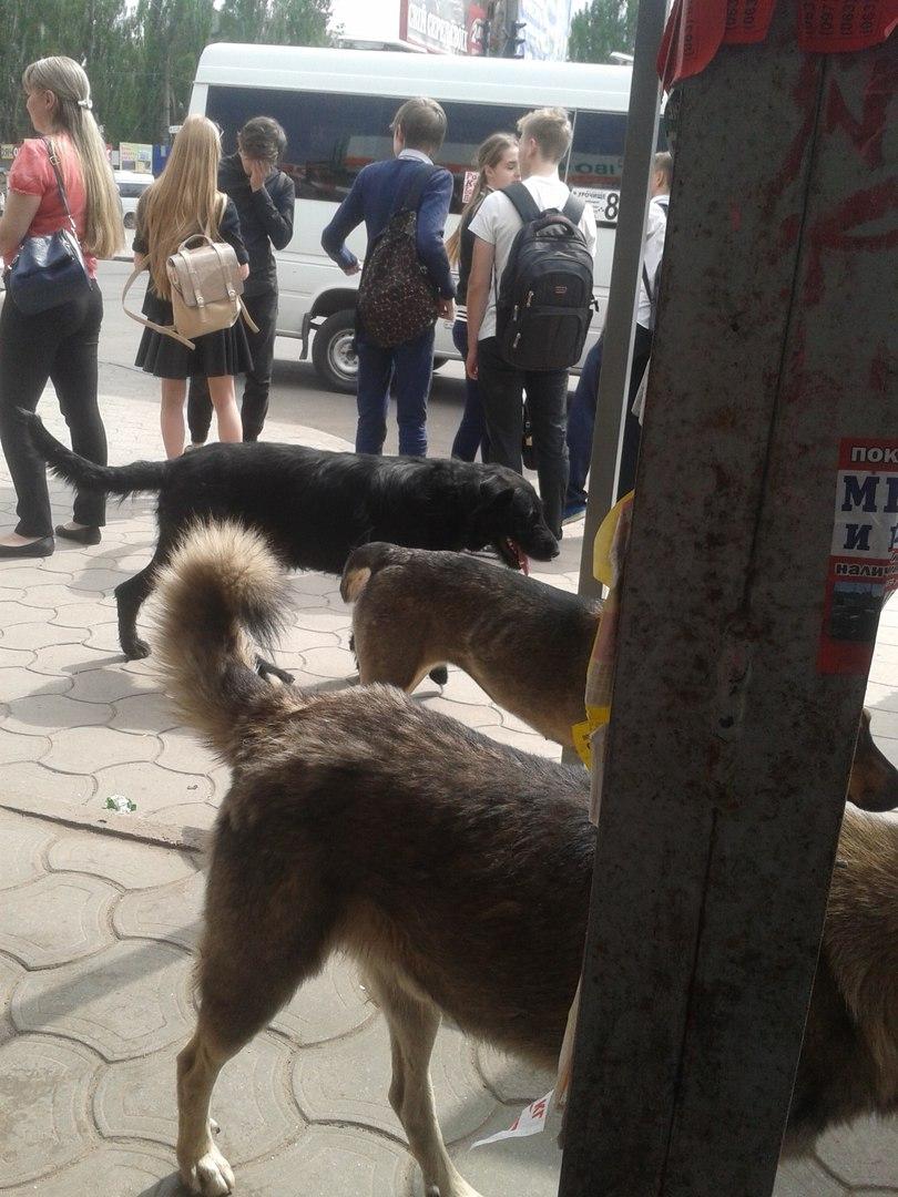 Куди у Миколаєві краще не потикатись, щоб не стати обідом для собак - фото 3