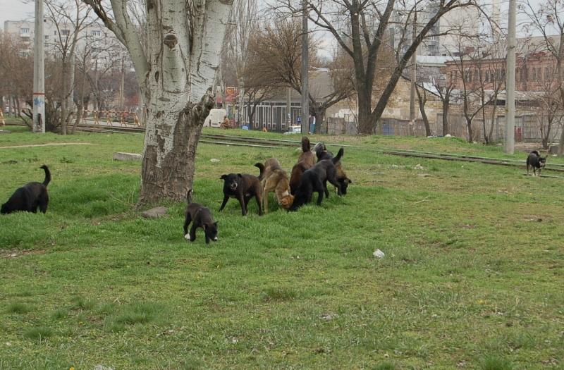 Чому Миколаїв перетворився на рай для диких собак та пекло для людей - фото 4
