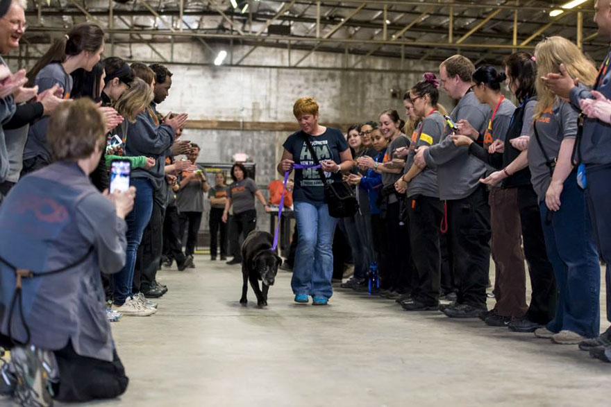 Як 520 котів і собак знайшли новий дім на вечірці - фото 1