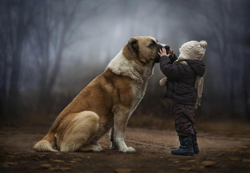 Коли слова зайві: як діти спілкуються з тваринами  - фото 1
