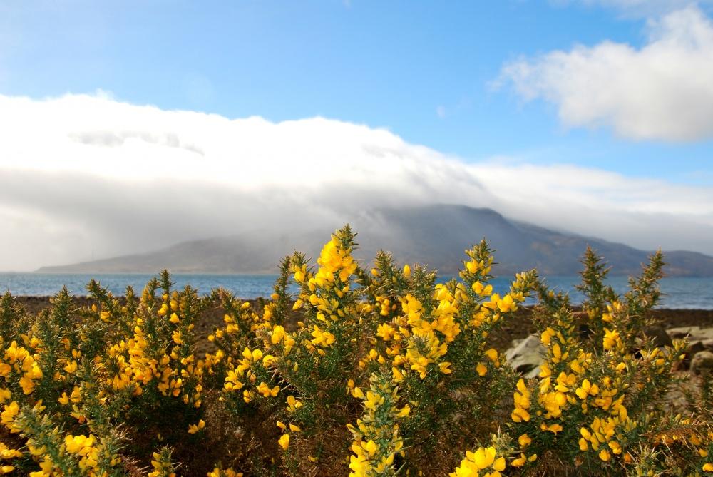 Як виглядає неймовірно казковий острів у Шотландії - фото 11