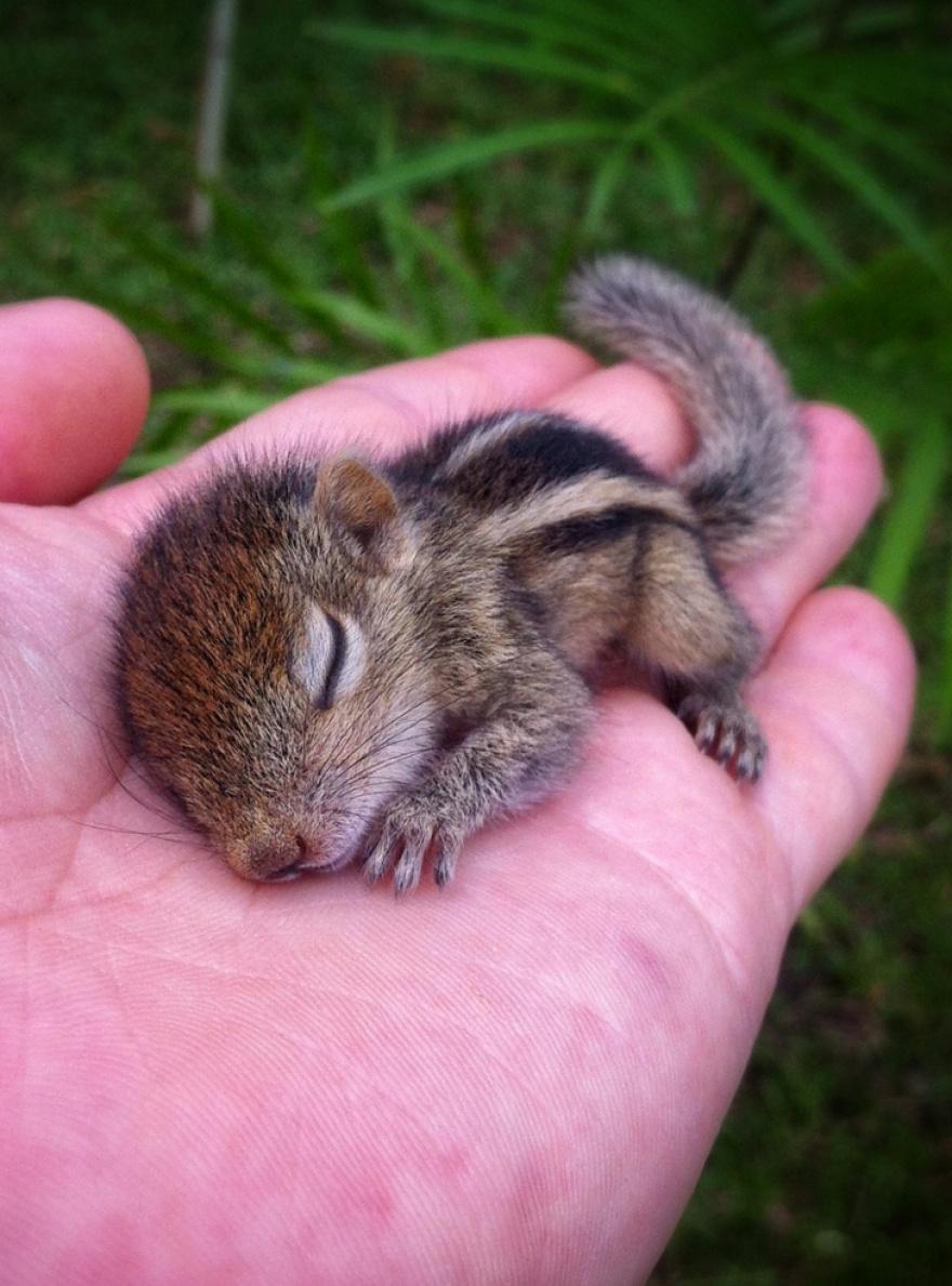 ТОП-13 крихітних новонароджених тваринок, які вміщуються на долонях  - фото 11