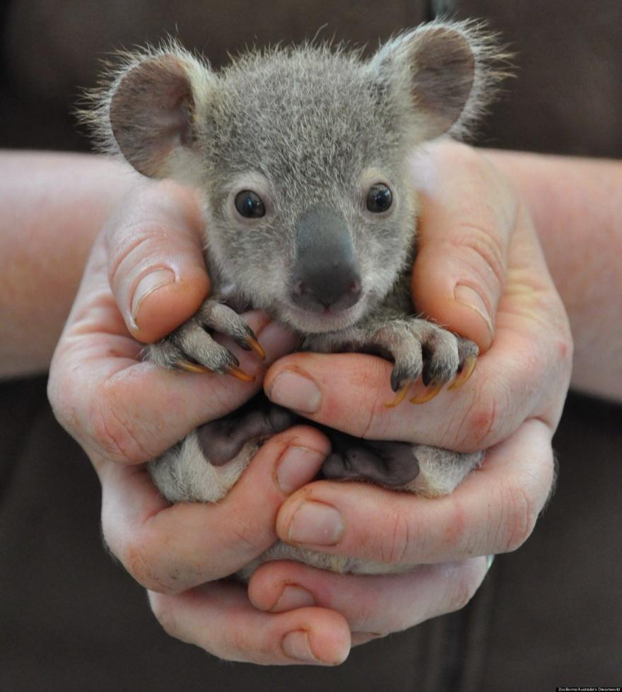 ТОП-13 крихітних новонароджених тваринок, які вміщуються на долонях  - фото 10