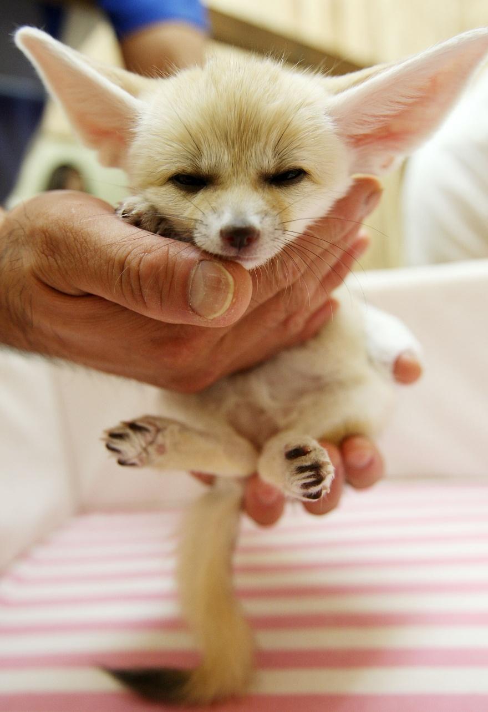 ТОП-13 крихітних новонароджених тваринок, які вміщуються на долонях  - фото 8