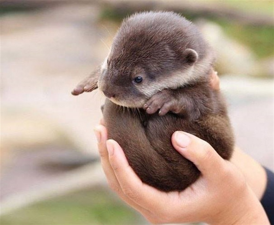 ТОП-13 крихітних новонароджених тваринок, які вміщуються на долонях  - фото 4