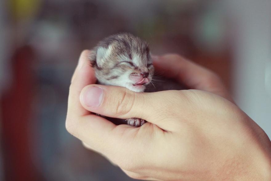 ТОП-13 крихітних новонароджених тваринок, які вміщуються на долонях  - фото 2