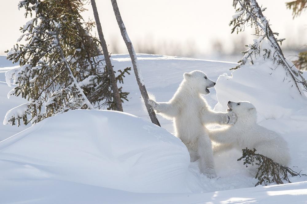Заради цих світлин фотограф провів 117 годин на лютому морозі  - фото 7