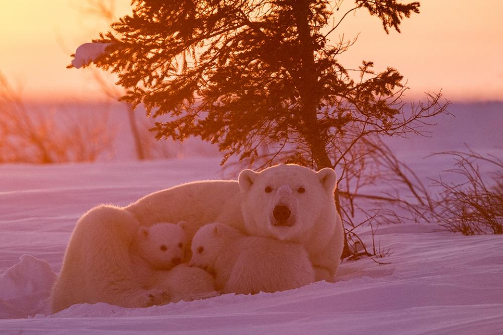 Заради цих світлин фотограф провів 117 годин на лютому морозі  - фото 6