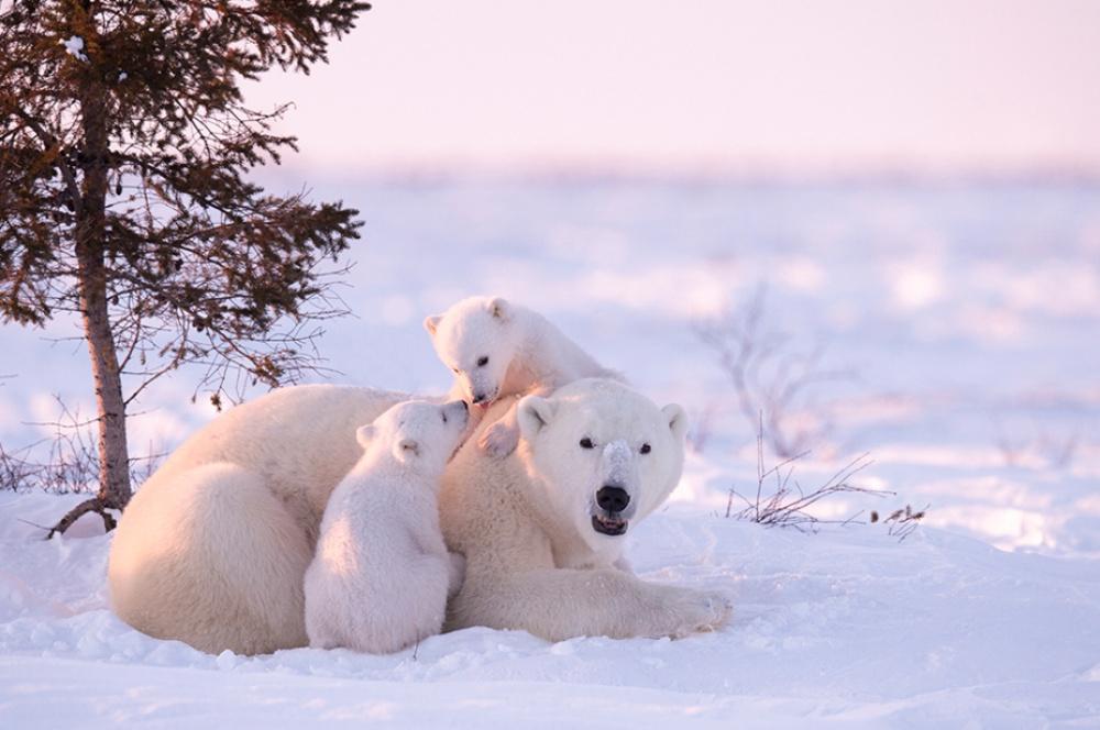 Заради цих світлин фотограф провів 117 годин на лютому морозі  - фото 4