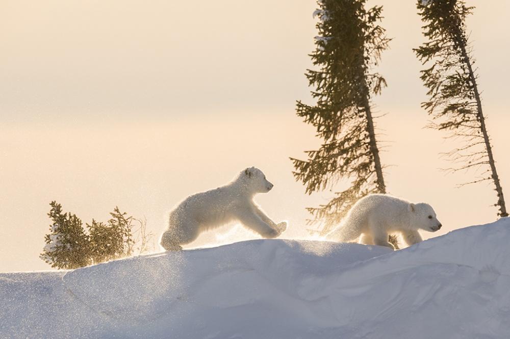 Заради цих світлин фотограф провів 117 годин на лютому морозі  - фото 3