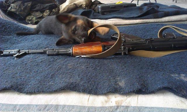 Чим займаються на Донбасі найкращі друзі бійців АТО - 2 - фото 8