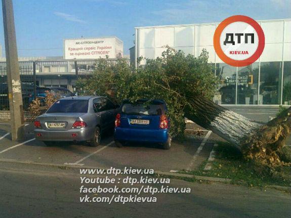 У Києві дерево розтрощило автомобіль - фото 2