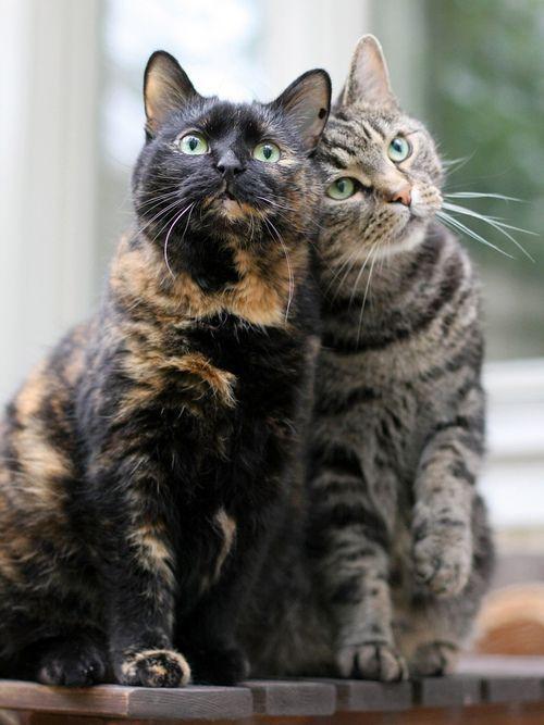 Пухнаста любов: Як коти готуються до Дня закоханих  - фото 12