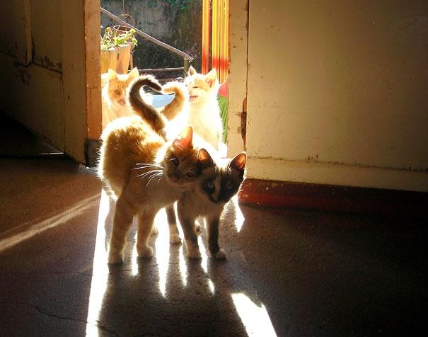 Пухнаста любов: Як коти готуються до Дня закоханих  - фото 13