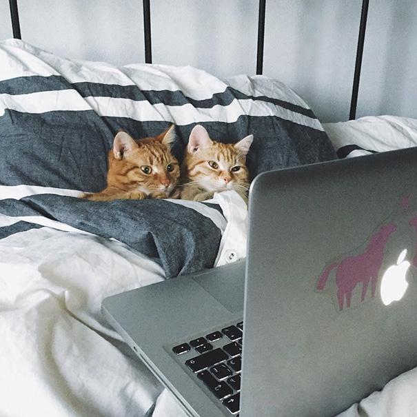 Пухнаста любов: Як коти готуються до Дня закоханих  - фото 2