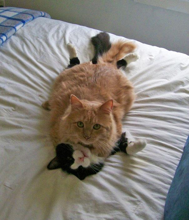 Пухнаста любов: Як коти готуються до Дня закоханих  - фото 3