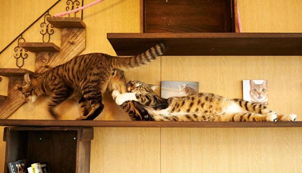 Пухнаста любов: Як коти готуються до Дня закоханих  - фото 4