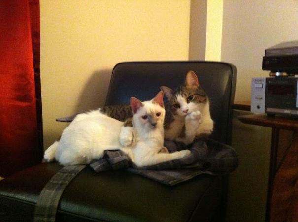 Пухнаста любов: Як коти готуються до Дня закоханих  - фото 5