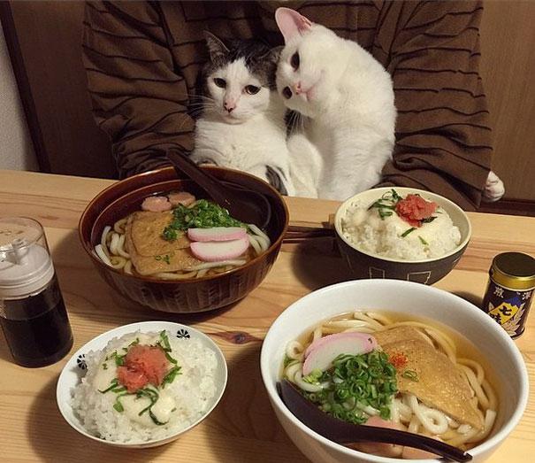 Пухнаста любов: Як коти готуються до Дня закоханих  - фото 6