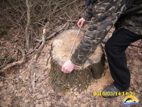 На Миколаївщині браконьєри масово знищують лісосмуги - фото 3