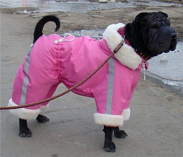 Холод собачий: ТОП-20 собак у зимовому одязі - фото 8