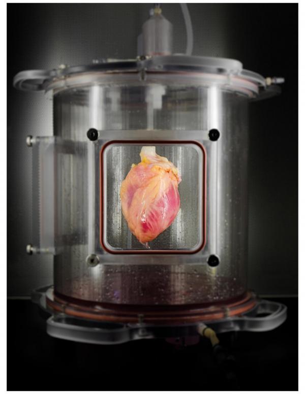 Вчені вперше виростили людське серце - фото 1