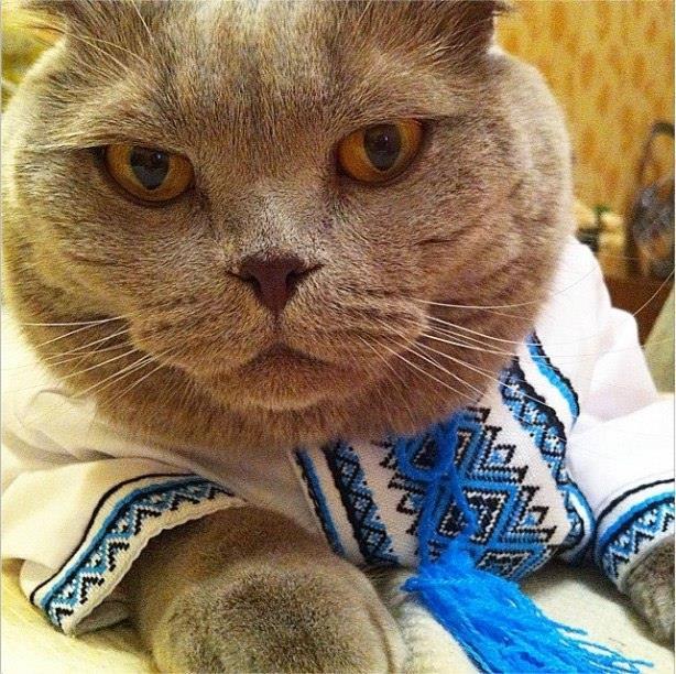 Як проходить День вишиванки у котів - фото 6