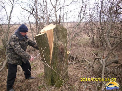 На Миколаївщині браконьєри масово знищують лісосмуги - фото 2