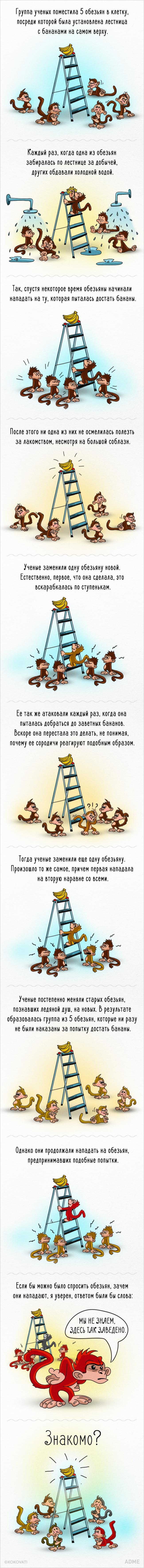 Як працює суспільство на прикладі мавп і бананів - фото 1