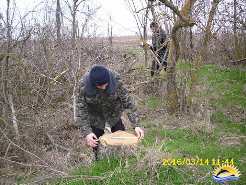 На Миколаївщині браконьєри масово знищують лісосмуги - фото 1
