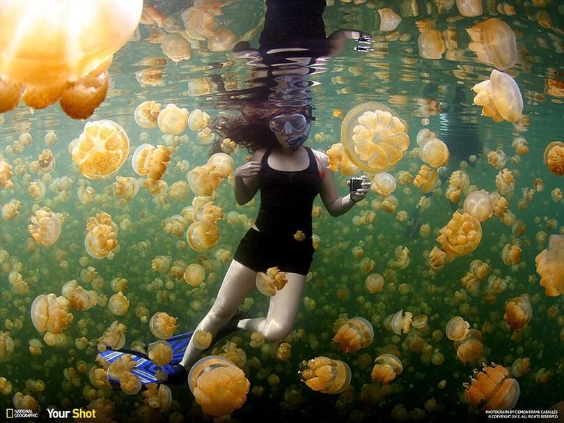 Найкращі фото неймовірної природи за версією National Geographic - фото 2