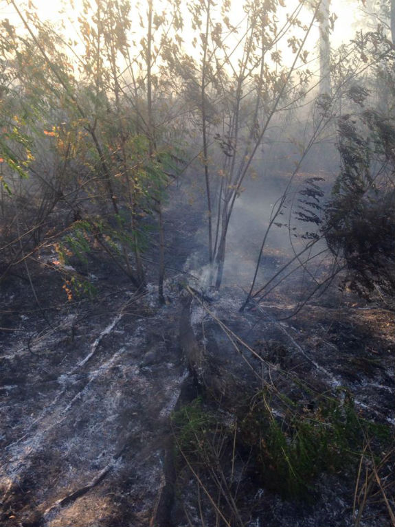 Як вигорів Труханів острів у Києві - фото 2
