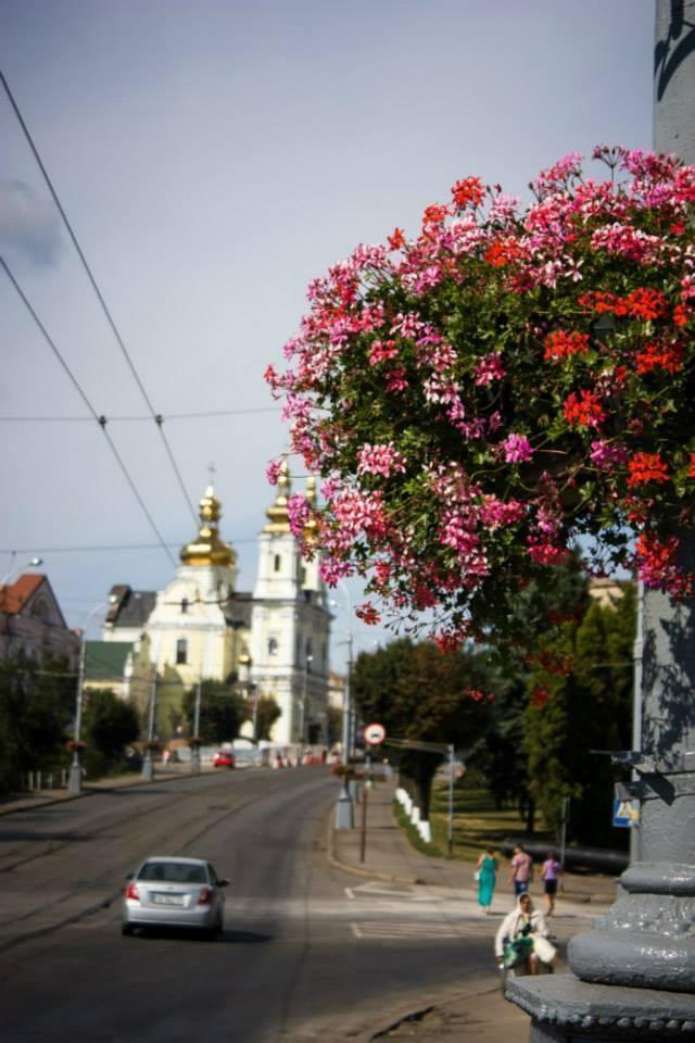 У Вінниці визначили кращі фотографії про любов до міста - фото 4